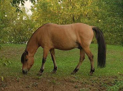 Zdjęcie konia Leon