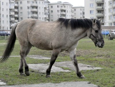 Zdjęcie konia Klekier