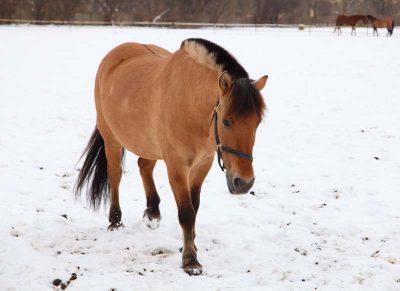 Zdjęcie konia Tymek